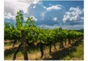 format vin